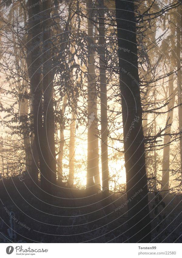 Winterwald Wald Nebel Frost Ast Nachmittagssonne
