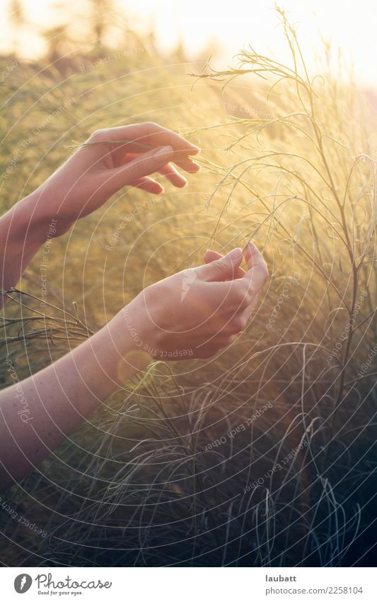 Sommer leichte Freude Leben harmonisch Wohlgefühl Zufriedenheit Erholung ruhig Meditation Ferien & Urlaub & Reisen Sommerurlaub Sonne Sonnenbad feminin