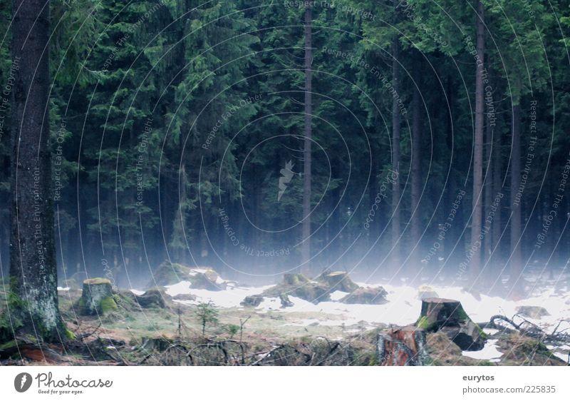Tannöd Umwelt Natur Landschaft Luft Nebel Eis Frost Schnee Baum Wald gruselig Forstwirtschaft Fichtenwald dunkel Farbfoto Außenaufnahme Tag Kontrast Silhouette