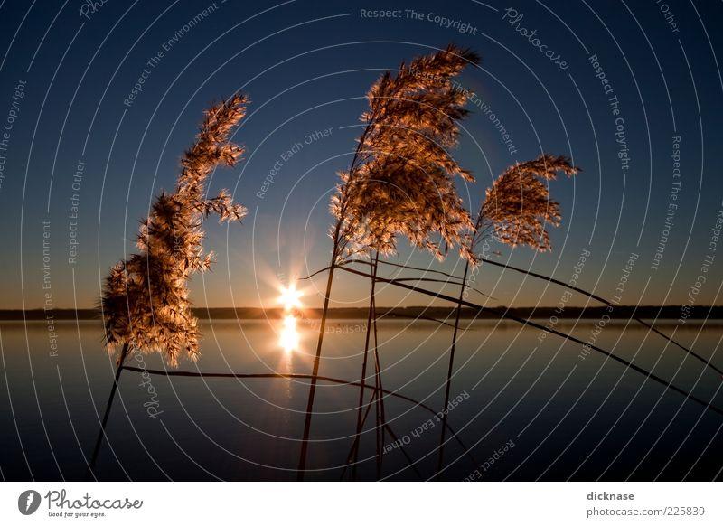 Practice Day Umwelt Natur Landschaft Wasser Himmel Wolkenloser Himmel Horizont Sonnenaufgang Sonnenuntergang Sonnenlicht Winter Schönes Wetter Pflanze Sträucher
