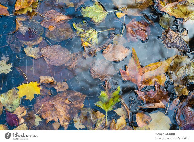 Herbstpfütze Design Gesundheit Umwelt Natur Wasser Winter Regen Pflanze Blatt Park verblüht dehydrieren braun gelb grün Pfütze nass Herbstlaub Vergänglichkeit