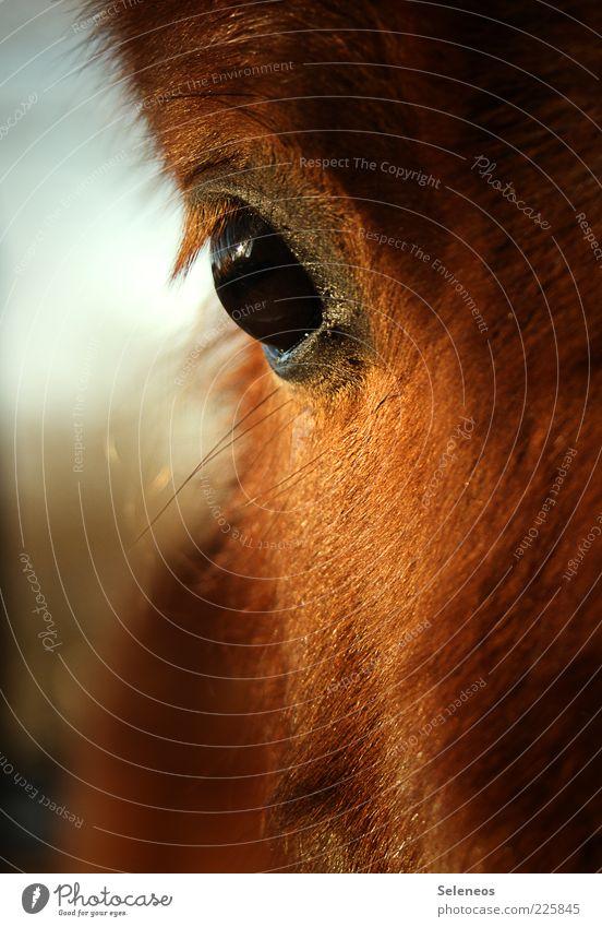 Warum hast du so große Augen? Natur schön ruhig Tier Umwelt frei Pferd nah Fell kuschlig Nutztier Pferdekopf