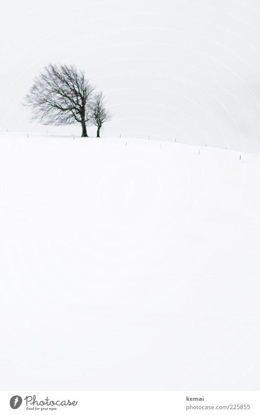 Berühmte Buche Umwelt Natur Landschaft Pflanze Himmel Winter Klima schlechtes Wetter Eis Frost Schnee Baum Wiese Feld Hügel Schauinsland kalt trist schwarz weiß