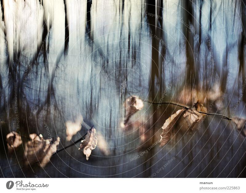 confusing Natur Herbst Baum Blatt Zweige u. Äste Wald dunkel kalt Surrealismus Farbfoto Außenaufnahme abstrakt Tag Dämmerung Licht Schatten
