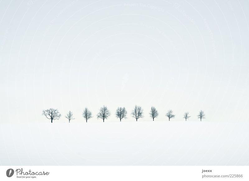 Durchzählen! Natur weiß Baum ruhig Winter schwarz gelb kalt Schnee Landschaft grau Idylle Reihe High Key Winterstimmung Baumreihe