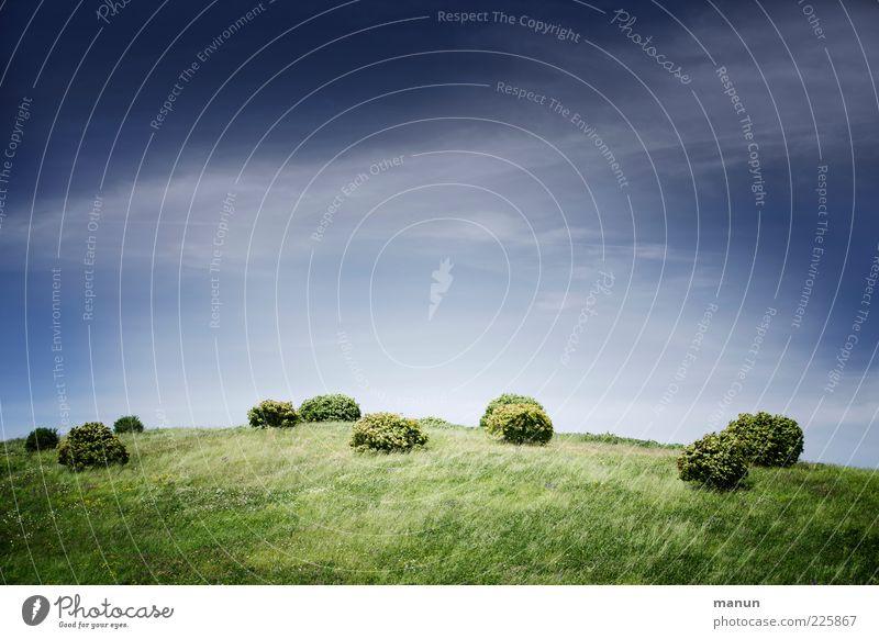 Noppen Natur Landschaft Himmel Frühling Sommer Pflanze Gras Sträucher buschig Wiese Hügel Wachstum authentisch rund Farbfoto Außenaufnahme Menschenleer Tag