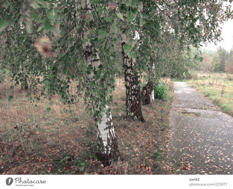 Alte Straße Natur grün Baum Pflanze Blatt Wald Wiese Herbst Umwelt Landschaft Gras Bewegung Wege & Pfade Wetter Wind Horizont