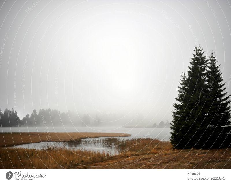 ein bisschen Nebel am Morgen... Winter Natur Landschaft Pflanze Wasser Herbst Wetter Baum Wald Seeufer Schweiz Wäldchen Morgennebel Waldrand Bucht Farbfoto