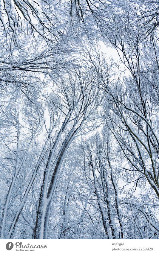Himmelsstürmer Natur weiß Baum Winter Wald Umwelt Schnee Schneefall Eis Frost silber schlechtes Wetter Nutzpflanze