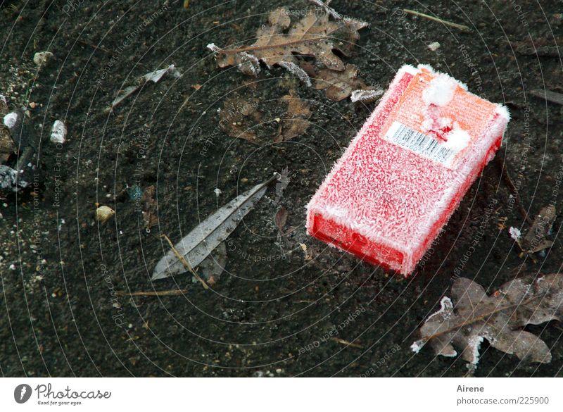 coole alte Schachtel Winter Eis Frost Blatt Straße Asphalt Straßenbelag Verpackung frieren Coolness kalt grau rot weiß Laster verschwenden gefroren welk Raureif