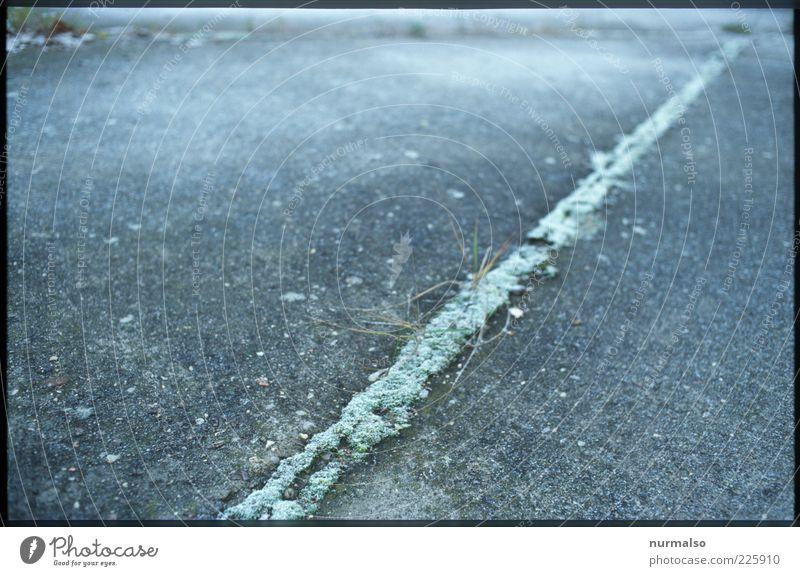 Green Line Umwelt Natur Winter Eis Frost Pflanze Gras Menschenleer Wege & Pfade Zeichen frieren eckig grau grün Stimmung Surrealismus Symmetrie Moos Fuge Beton