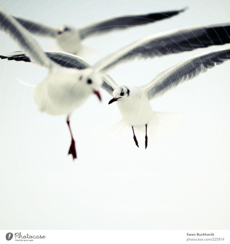 don´t worry be happy Himmel Natur weiß Sommer Tier Umwelt oben grau Luft Vogel fliegen Flügel Tiergruppe beobachten Tiergesicht Unendlichkeit