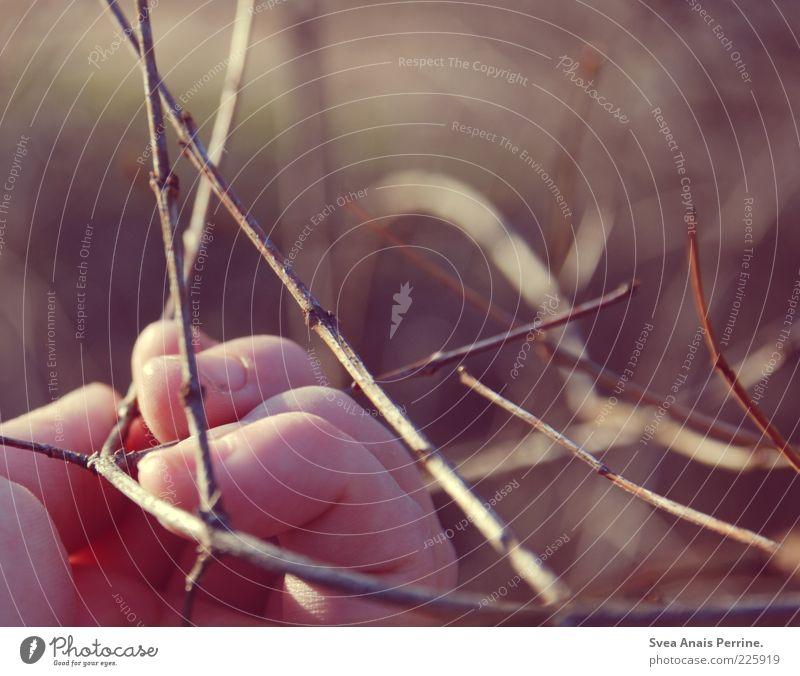 zweig der zweifel. Junge Frau Jugendliche Hand Finger 1 Mensch Umwelt Natur Pflanze Baum Ast schön weich rosa Zufriedenheit Lebensfreude Sehnsucht Verfall