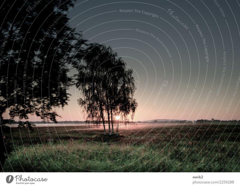 Geschwindigkeitsrausch Ausflug Ferne Freiheit Umwelt Natur Landschaft Pflanze Luft Wolkenloser Himmel Horizont Herbst Schönes Wetter Nebel Baum Gras Sträucher