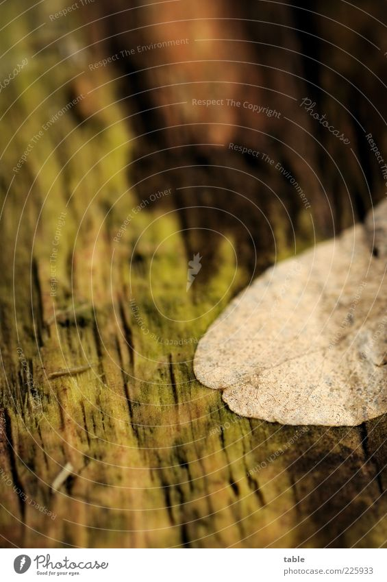 Zersetzung Natur alt grün Baum Pflanze Blatt Winter Herbst Umwelt Holz braun liegen Wandel & Veränderung Vergänglichkeit trocken Vergangenheit