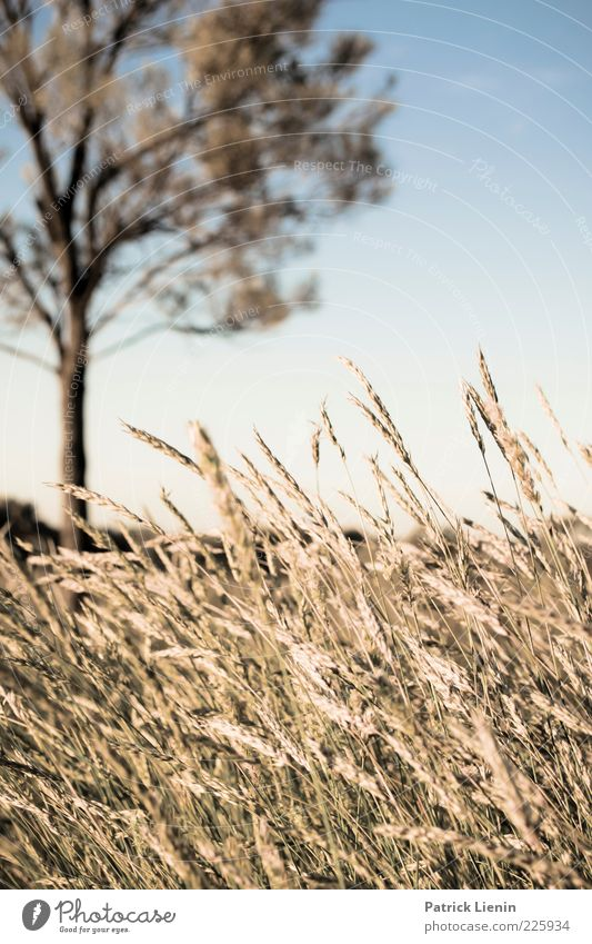 flies everywhere Umwelt Natur Landschaft Pflanze Urelemente Sonne Sonnenlicht Sommer Klima Wetter Schönes Wetter Baum Nutzpflanze Wildpflanze Feld Outback
