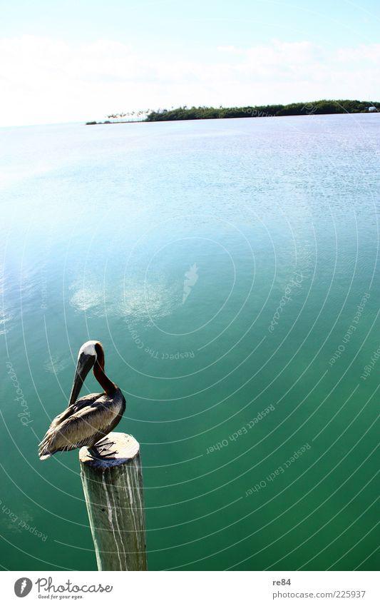 Vogelperspektive. Himmel Wasser Sonne Sommer Meer Ferien & Urlaub & Reisen Ferne Tier Umwelt Landschaft Luft Wetter Vogel Insel Flügel Schönes Wetter