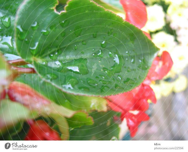 Blatt Natur Wasser