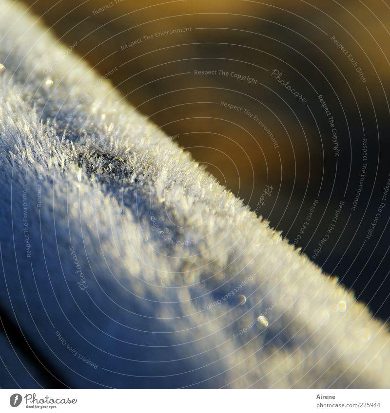 Winterpelz Sonnenlicht Eis Frost Holz Kristalle frieren glänzend kalt natürlich schön blau braun weiß ästhetisch Geländer Balken Raureif Farbfoto Außenaufnahme