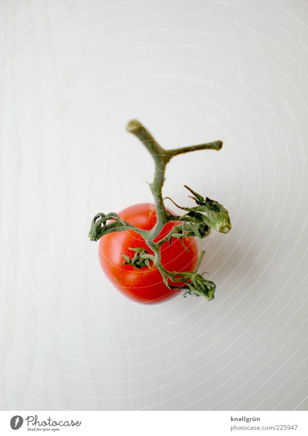 Fast schon Ketchup weiß grün rot Blatt Gesundheit Ernährung Lebensmittel Gemüse Appetit & Hunger Stengel lecker Bioprodukte Diät Tomate Vegetarische Ernährung