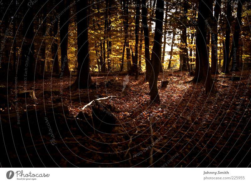 Durch's Geäst. Natur Herbst Baum Wald authentisch Umwelt Farbfoto Außenaufnahme Menschenleer Tag Schatten Froschperspektive dunkel herbstlich