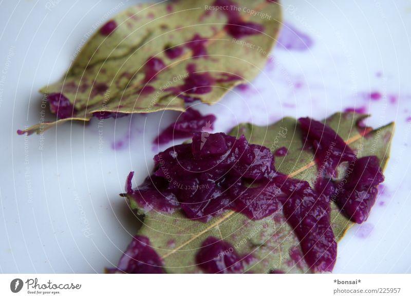 ohne glutamat Lebensmittel Gemüse Kräuter & Gewürze Rotkohl Ernährung Vegetarische Ernährung Duft liegen einfach frisch lecker natürlich saftig grün violett