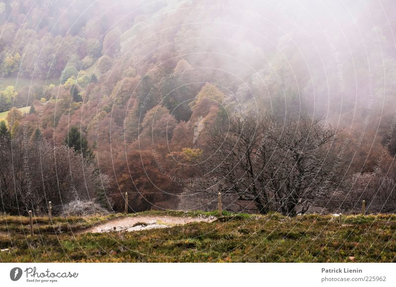 unterwegs Natur grün Baum Pflanze Wald kalt dunkel Herbst Berge u. Gebirge Umwelt Landschaft Wege & Pfade Stimmung Wetter Nebel Hügel