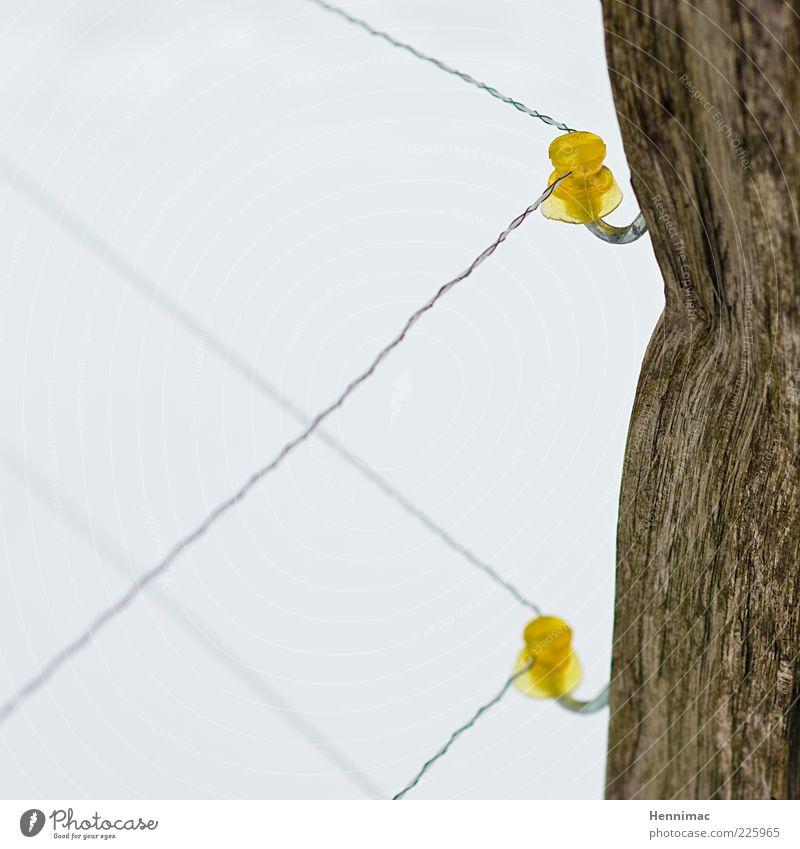 Mutprobe. Seil Winter Holz Kunststoff dünn braun gelb weiß Schutz Angst Respekt Misstrauen Energie Neugier Elektrizität elektronisch Zaun Draht unbequem