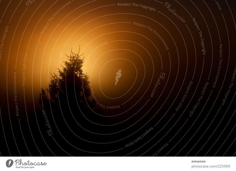 underfog Natur Baum Pflanze Sommer Winter schwarz gelb dunkel Umwelt Wetter Nebel Klima leuchten Ast Nadelbaum Silhouette