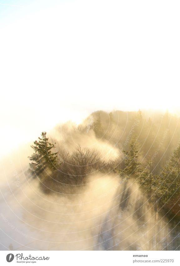 overfog Winter Umwelt Natur Landschaft Pflanze Wolken Sonnenlicht Klima Wetter Nebel Baum Wald hell Nebelmeer Nebelwald Nebelgrenze Nebeldecke Nadelwald Tanne