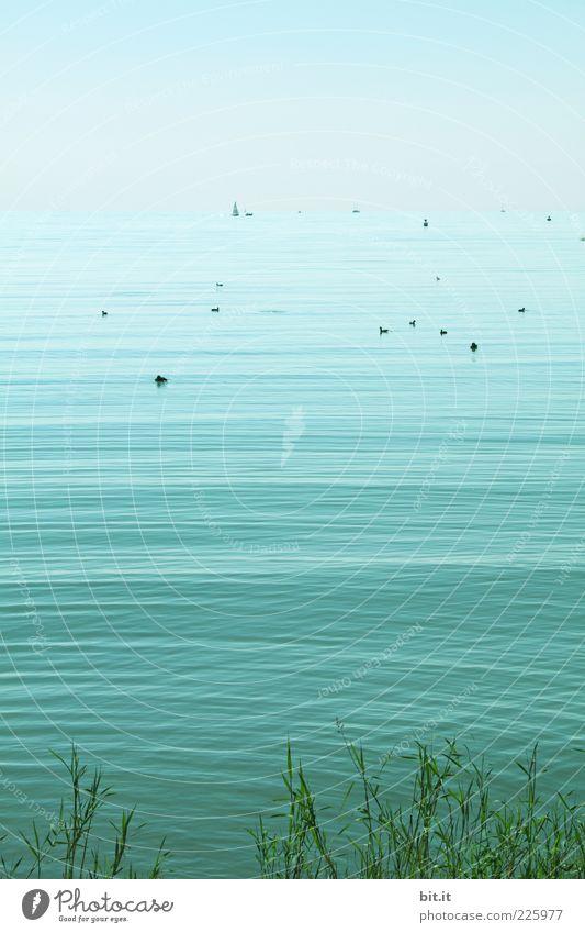Am Ufer Natur blau Wasser Sommer Meer Freude ruhig Ferne Erholung Umwelt Landschaft Gras Küste See Wasserfahrzeug Wellen