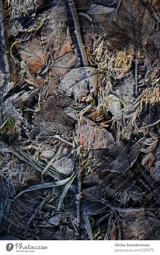 Naturkunst Blatt Winter kalt Wiese dunkel Herbst Gras Eis Erde natürlich Boden Frost gefroren reif vertrocknet Textfreiraum