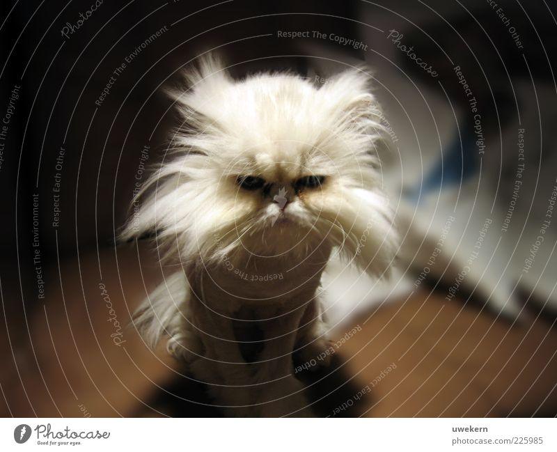 Na danke Katze schön Freude Tier Traurigkeit außergewöhnlich verrückt Coolness niedlich Fell Tiergesicht Wut skurril trashig frieren