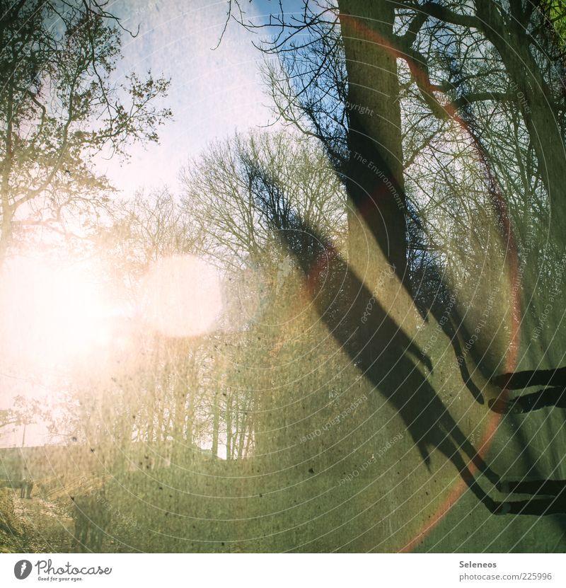 Doppelgänger Mensch Himmel Natur Baum Pflanze Sonne Umwelt Straße Landschaft Herbst Freiheit Bewegung Beine Lampe Horizont laufen