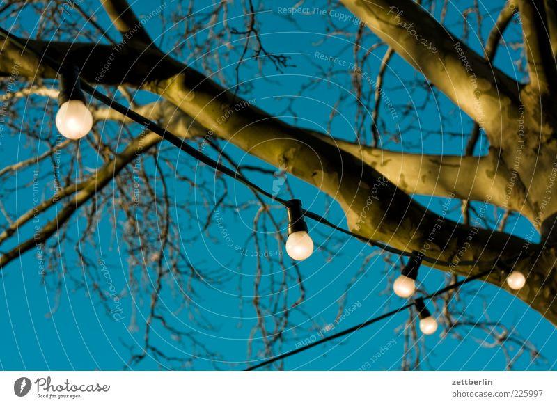 Lichterkette Umwelt Natur Baum hell Schöneberg wallroth Ast Baumstamm Illumination himmelblau Wolkenloser Himmel erleuchten Sonne Farbfoto Außenaufnahme