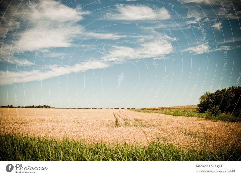 Rodenäs. Versuch 852. Himmel Natur grün blau Sommer Wolken Einsamkeit Ferne gelb Umwelt Landschaft Gras hell Zufriedenheit Feld Horizont
