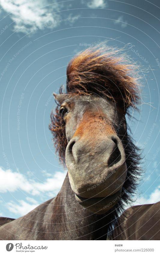 """Bob """"The Bear"""" Himmel Natur Wolken Tier Stimmung lustig Wind warten ästhetisch wild natürlich stehen Pferd Wildtier niedlich Tiergesicht"""