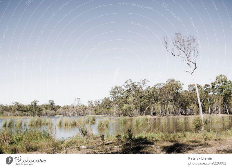 Down by the water Umwelt Natur Landschaft Pflanze Urelemente Wasser Himmel Wolkenloser Himmel Sonnenlicht Sommer Klimawandel Wetter Schönes Wetter Baum Gras