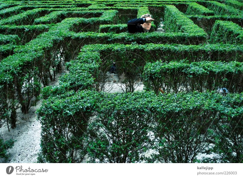 pfadfinder Mensch Mann Pflanze Erwachsene Spielen Wege & Pfade Garten Park maskulin Sträucher Suche Ziel Richtung Navigation Geometrie falsch