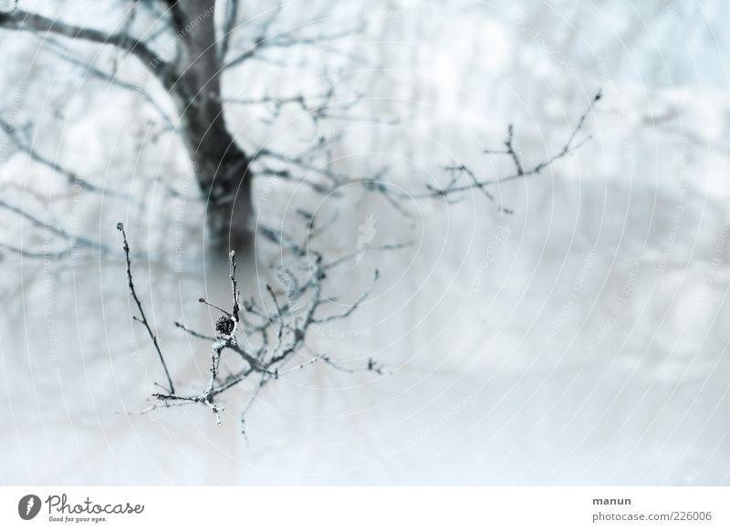 Flut Natur Wasser Winter Regen Baum Zweige u. Äste See Wassermassen überschwemmt Überschwemmung Sintflut authentisch nass Farbfoto Außenaufnahme Menschenleer