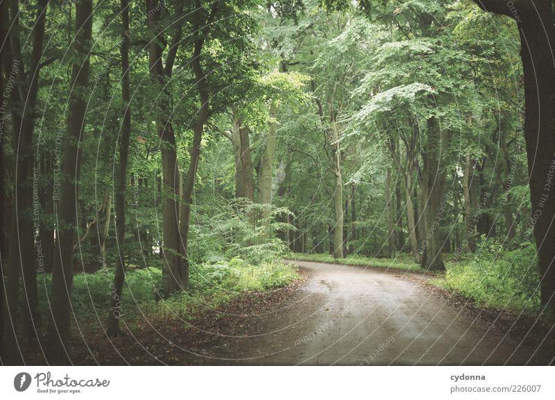 Waldweg Wohlgefühl Zufriedenheit ruhig Ausflug Ferne Freiheit wandern Umwelt Natur Landschaft Baum Bewegung Einsamkeit einzigartig Idylle Leben träumen