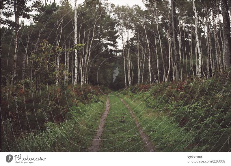 / \ Natur schön Baum ruhig Einsamkeit Ferne Wald Erholung Leben Umwelt Freiheit Landschaft Gras Bewegung Wege & Pfade träumen