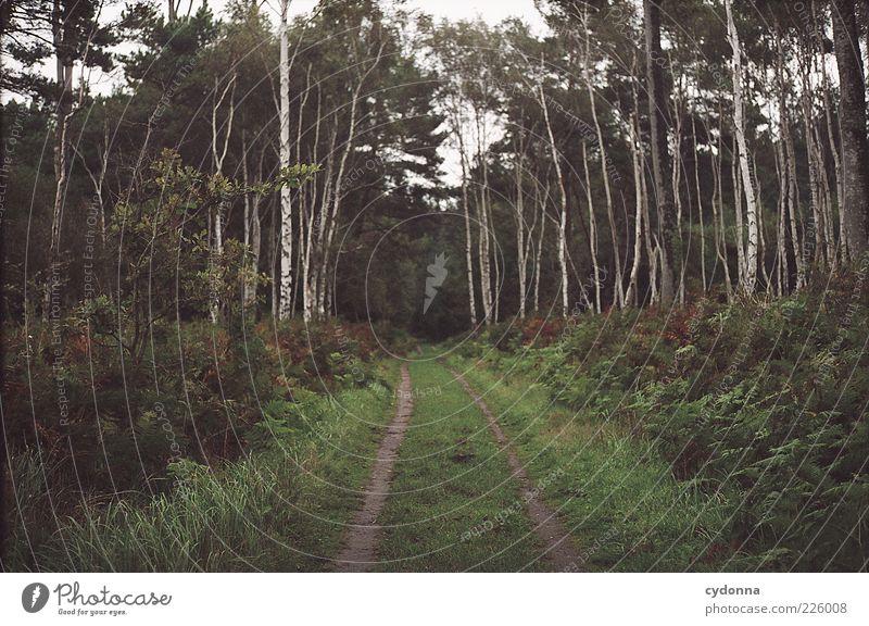 / \ Wohlgefühl Erholung ruhig Ferne Freiheit Umwelt Natur Landschaft Baum Gras Sträucher Farn Wald Bewegung Einsamkeit einzigartig geheimnisvoll Idylle Leben