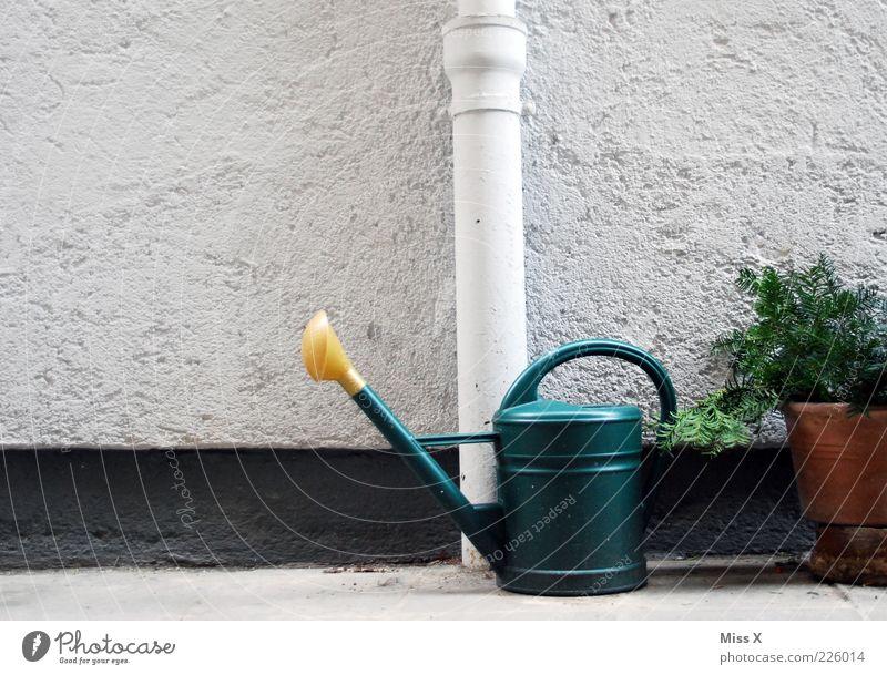 Garten Häusliches Leben Pflanze Sträucher Mauer Wand grau Gießkanne gießen Farbfoto Außenaufnahme Menschenleer Fallrohr Regenrohr Fassade Blumentopf
