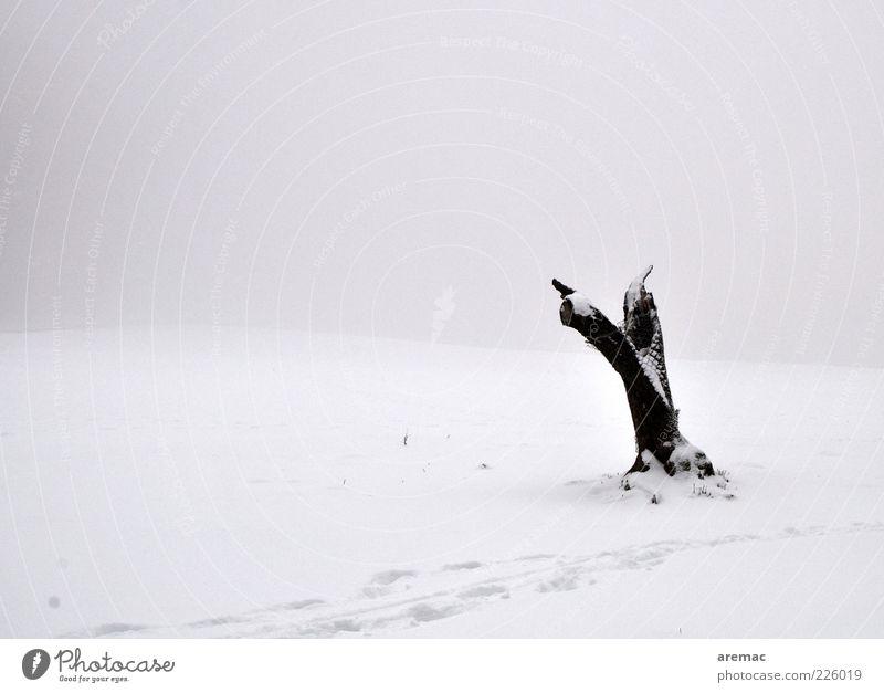 Aufgeräumt Umwelt Natur Landschaft Pflanze Winter Wetter Nebel Eis Frost Schnee Baum Feld alt schwarz weiß Gefühle Einsamkeit Ende kalt ruhig Verfall