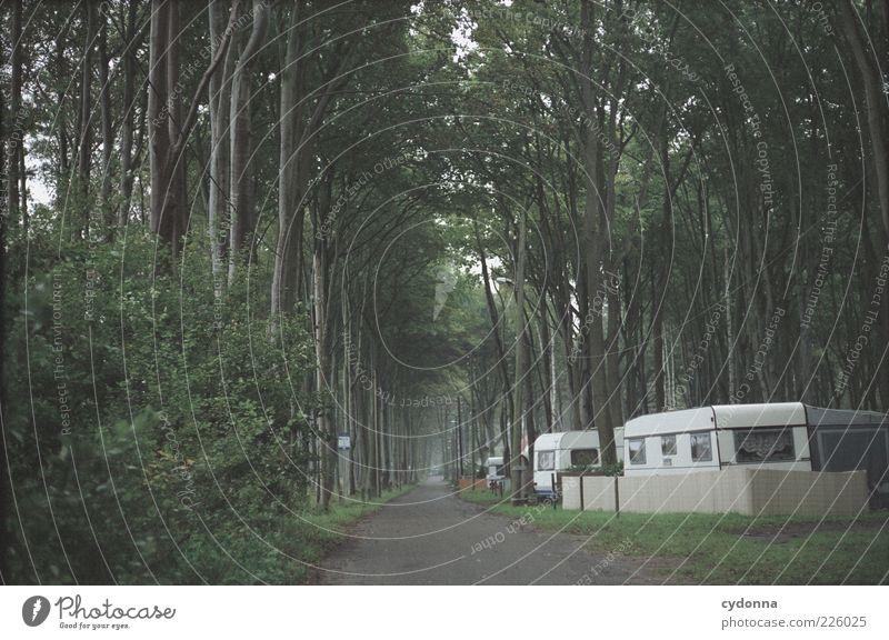 Dauercamper beim Mittagsschlaf Natur Baum Ferien & Urlaub & Reisen ruhig Einsamkeit Ferne Wald Erholung Leben Umwelt Landschaft Wege & Pfade träumen Deutschland