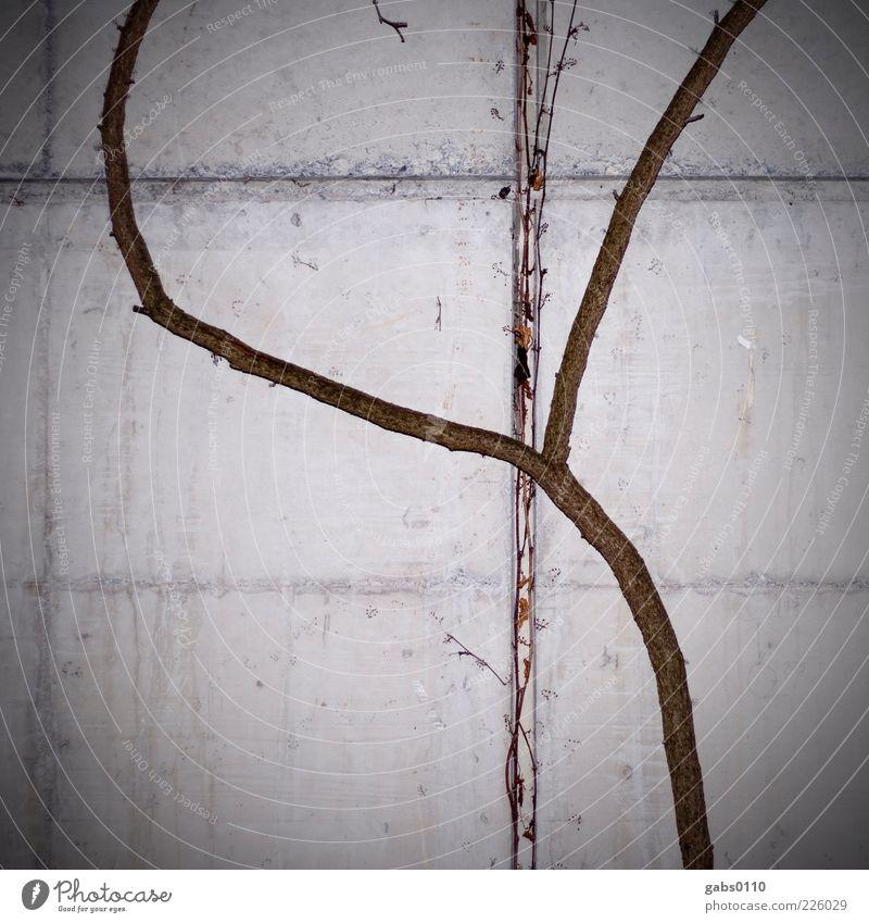 Natur VS Technik Natur weiß Pflanze Winter schwarz kalt Wand Umwelt Holz grau Mauer braun Beton Wachstum Kreuz beweglich