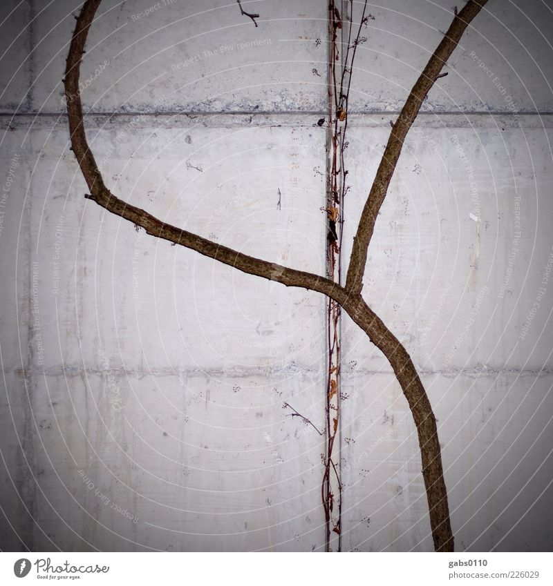 Natur VS Technik Umwelt Winter Pflanze Mauer Wand Beton Holz Wachstum braun grau schwarz weiß beweglich Kreuz Ranke Vignettierung kalt Durchsetzungsvermögen