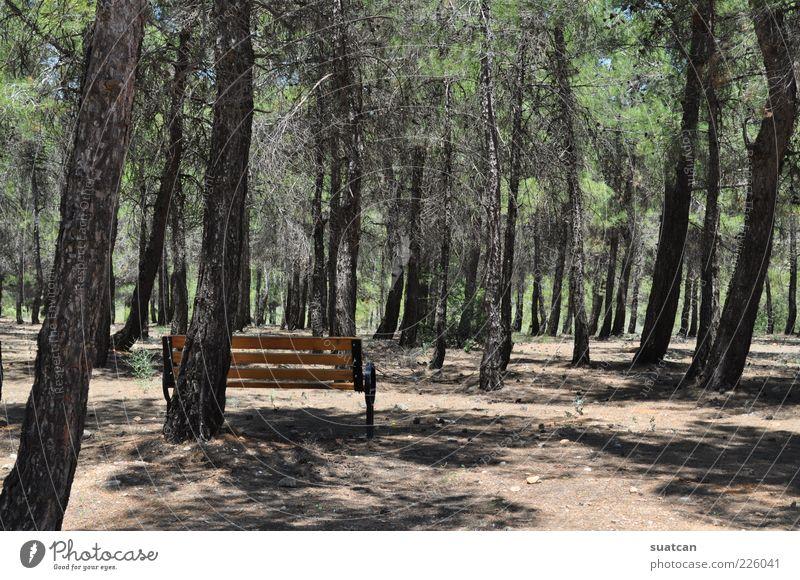 Natur Baum Einsamkeit Wald kalt Park Landschaft einzigartig