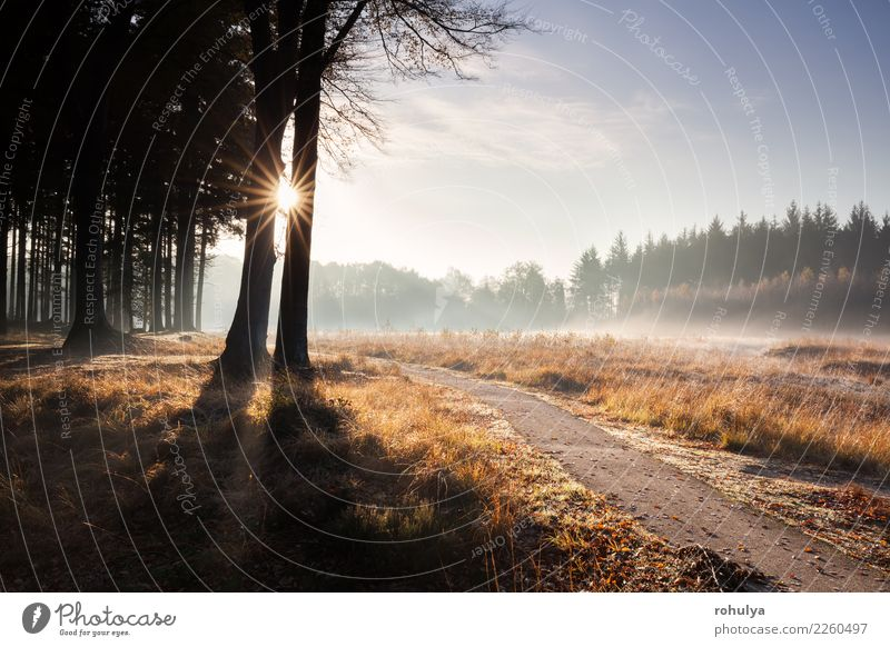 Weg im goldenen Herbst sonnigen Wald Sonne wandern Natur Landschaft Himmel Sonnenaufgang Sonnenuntergang Nebel Baum Straße Wege & Pfade hell schön Buchsbaum